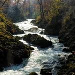 A Radovna folyó a Vintgar szurdokban