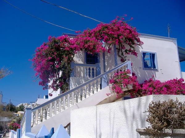 A krétai nyaralást megfejeltük egy kirándulással Santorini-re. Ez a növényke ott terebélyesedett…