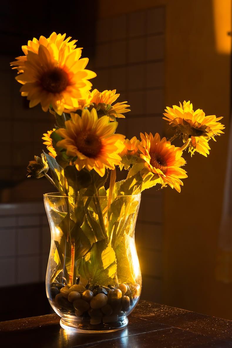 Sunflowers of Toscana